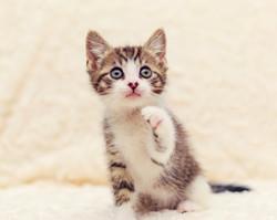 SAM assisted kitten 22