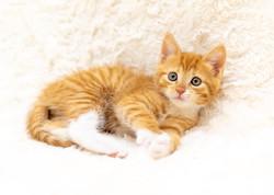 SAM assisted kitten 41