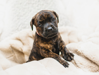 Preparing for the arrival of a new puppy