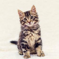 SAM assisted kitten 23