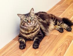 SAM assisted cat 3