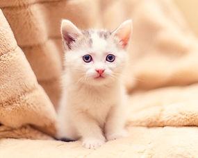 SAM assisted kitten 50