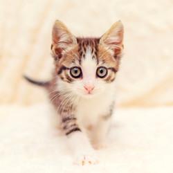 SAM assisted kitten 21