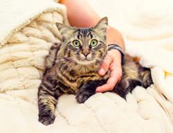 SAM assisted cat 4