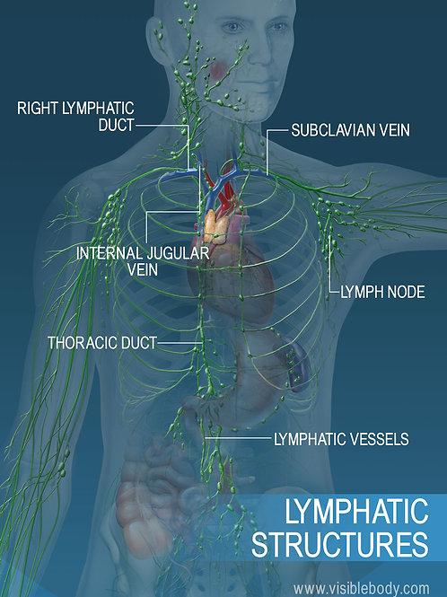 BIO-ELECTRIC LYMPHATIC DRAINAGE