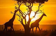 Kenya-scene.jpg