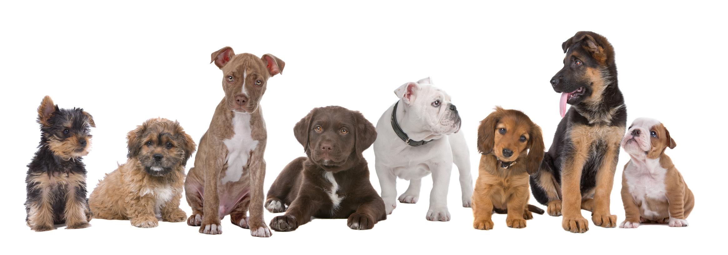 Electronic-Dog-Training-Collar.jpg