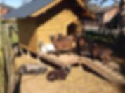 Animaux de la ferme la verdine.jpg