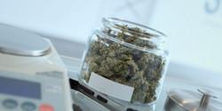 Cannabis - Medical Marijuana