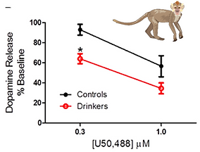 monkey graph.png