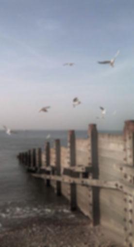 gulls2_edited_edited.jpg