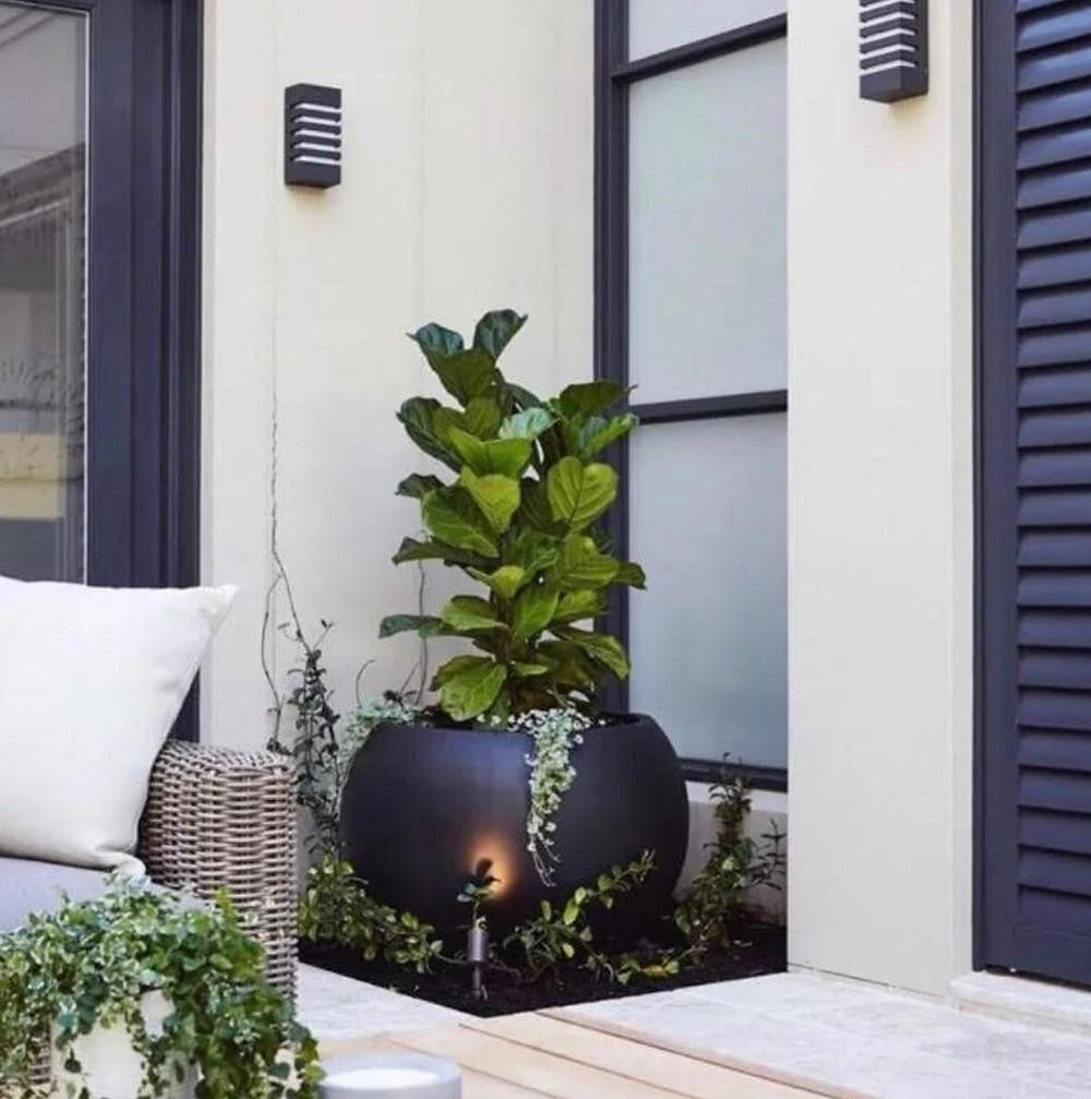 Large Black Round Planter with Fig Leaf Tree White House Black Doors Black Windows