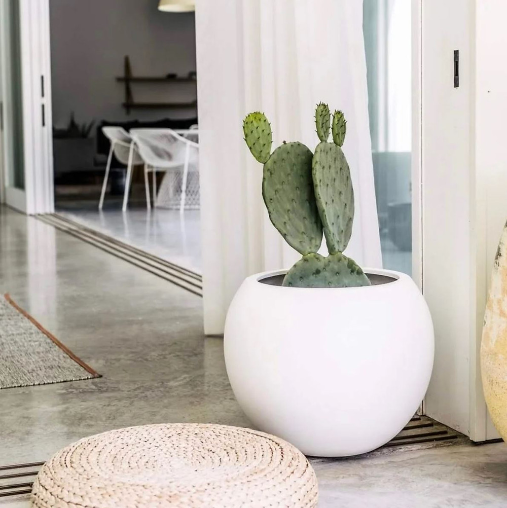 Large white round planter with cactus