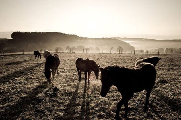 Cavalli Maremma