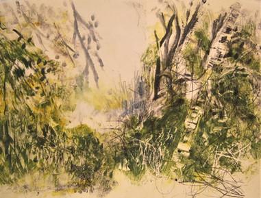 Among the trees Monotype, 38X28 cm.  2018