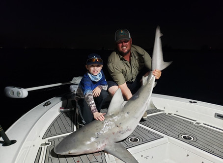 Why Tampa Bay Has The Best Shark Fishing In Florida