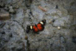 butterfly-243809_1920.jpg
