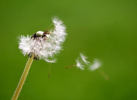 Pause, notice, breathe...respond