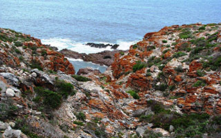 Whale Trail coast
