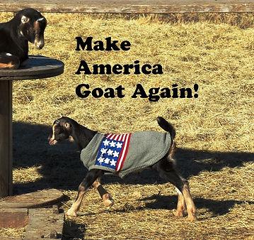 Goat America Cover.jpg