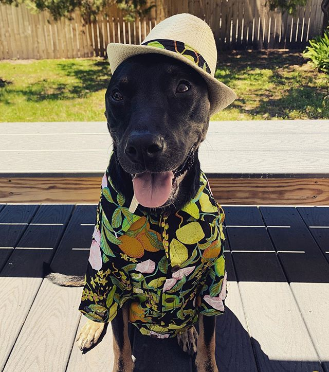 Bruno showing off his new summer outfit!