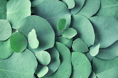 Native Bloom Co, gum leaves