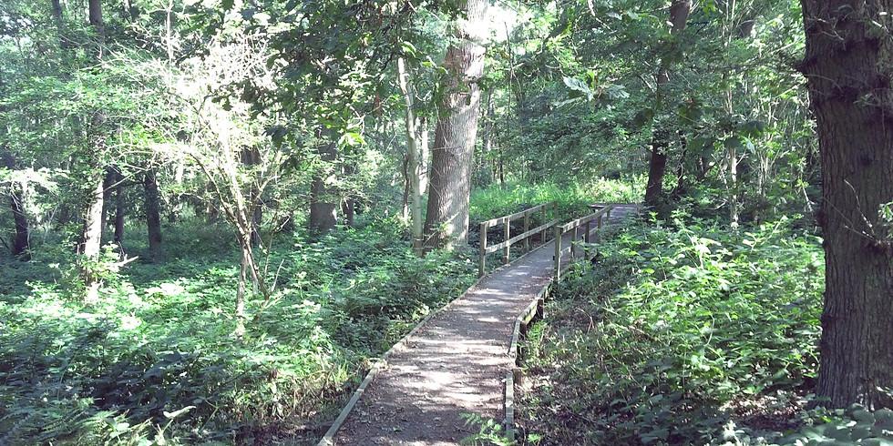 Meditations at Spring Wood Nature Reserve