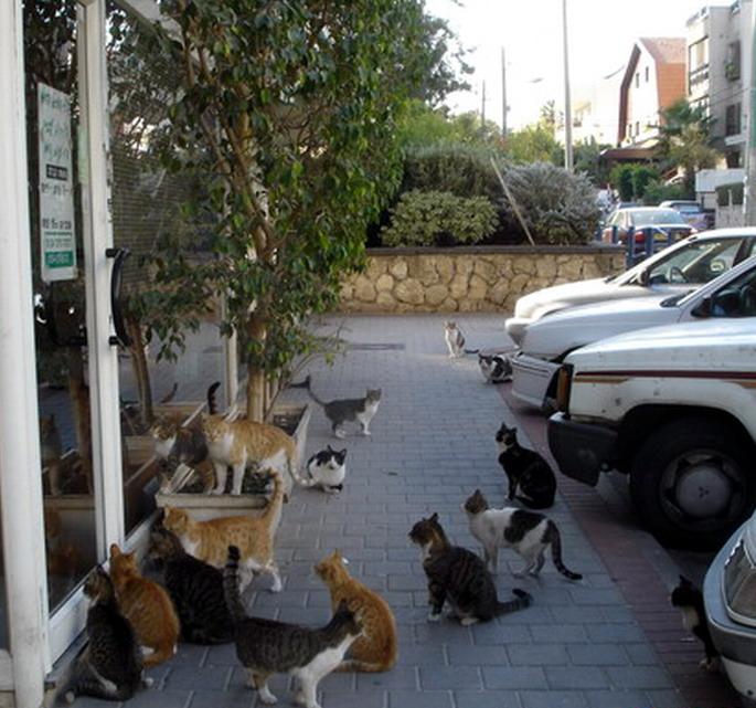 חתולים בצמרת