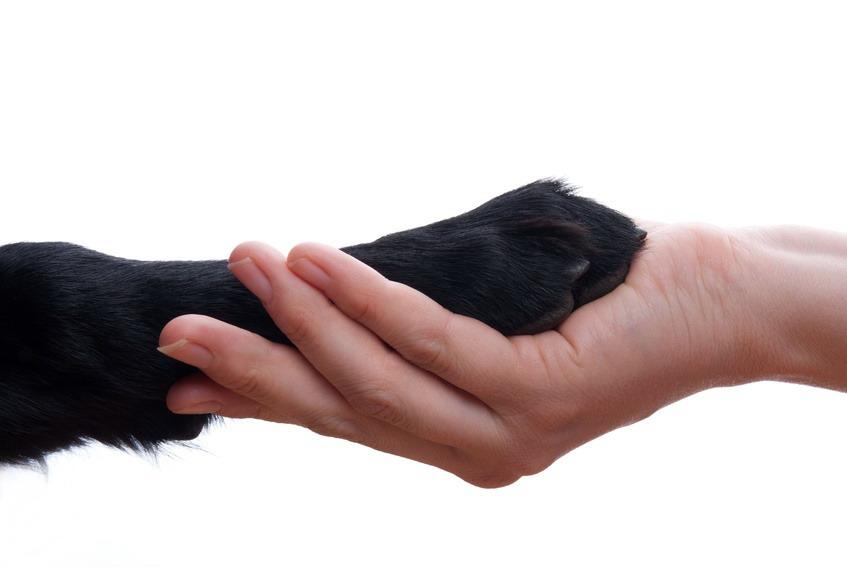 יד לוחצת יד