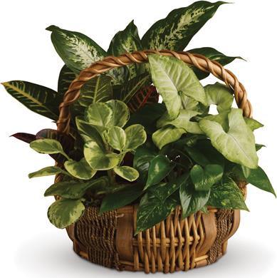 Basket of Greens