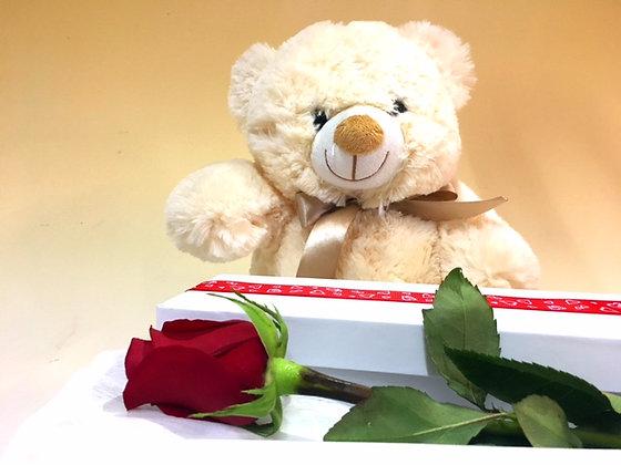 Teddy & Single Rose in Presentation Box