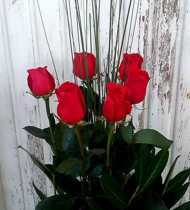 6 Amazing Imported Roses