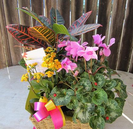 Assorted love basket