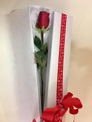 Single Rose in Presentation Box