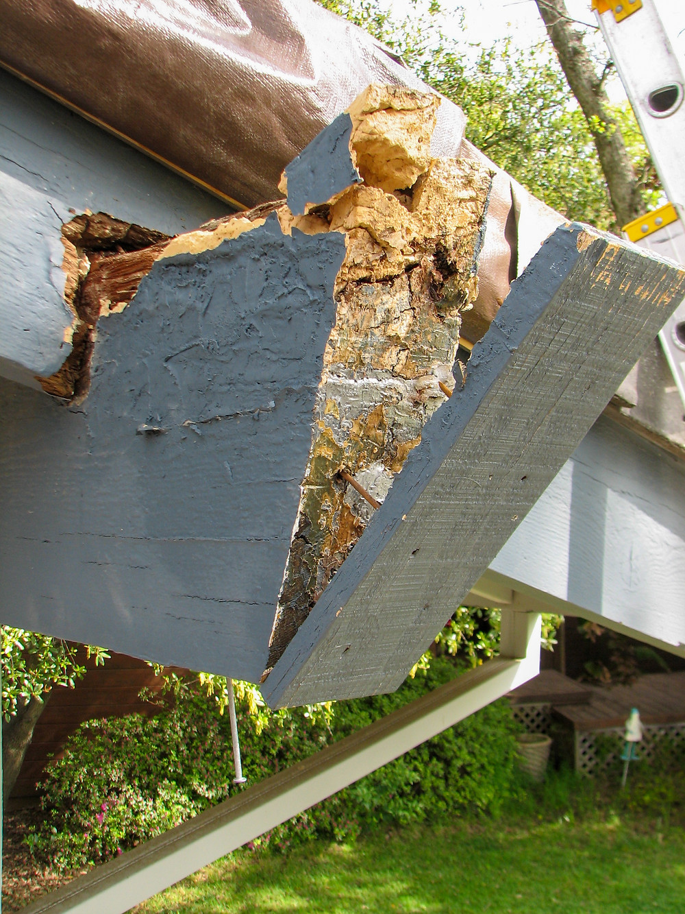 Epoxy dry rot repair in wood beam with dry rot