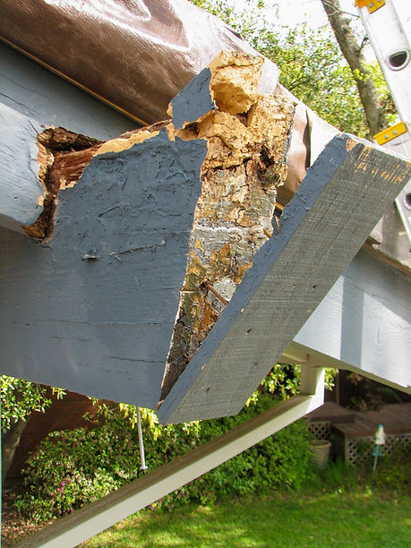 """A failed dry rot repair of a load-bearing roof beam. The """"fix"""" used fillers (epoxy & bondo) and then simply covered up the remaining dry rot fungus and decay. The dry rot continued to spread deeper into the beam & adjoining rafter. Simply covering over dry rotfor looks does more harm than good."""