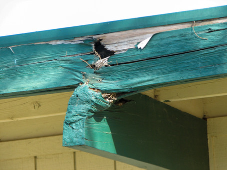 What Is Roof Beam Dry Rot?