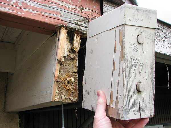 Failed dry rot repair of a roof beam that was done dowels and glue.