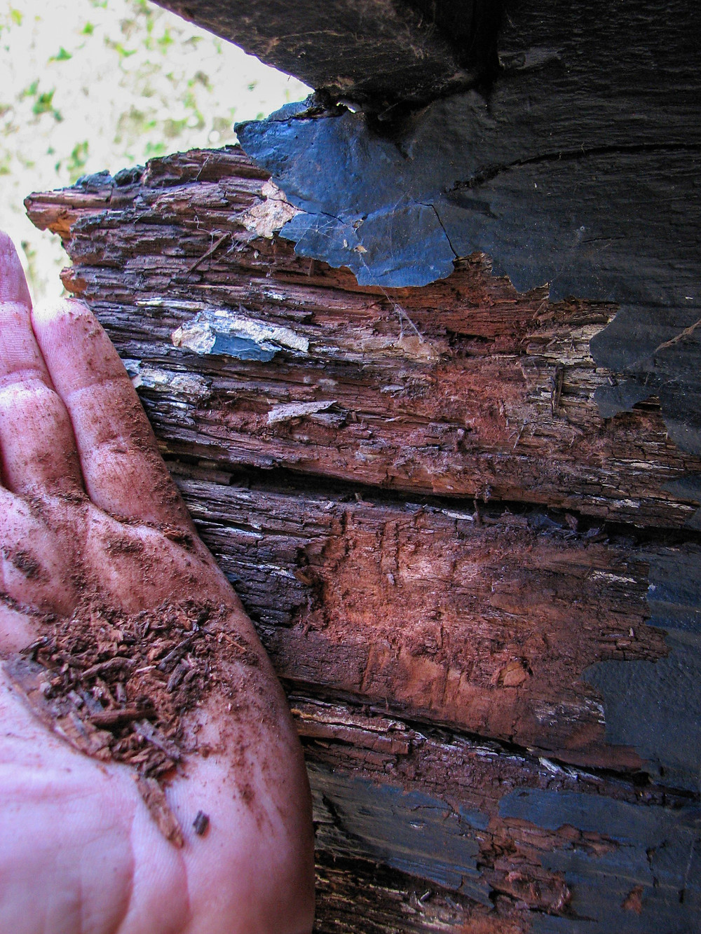Brown rot in an exterior beam that's turned to dust