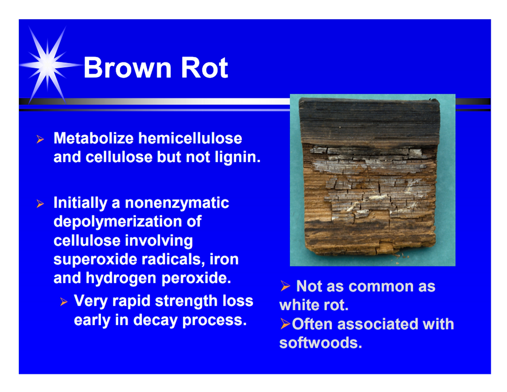 brown rot image with explainers of how it destroys wood