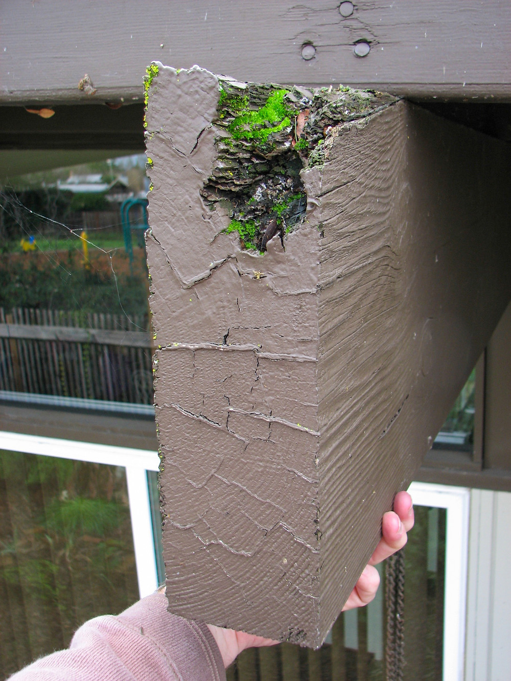 Dry rot eaten beam with moss growing inside
