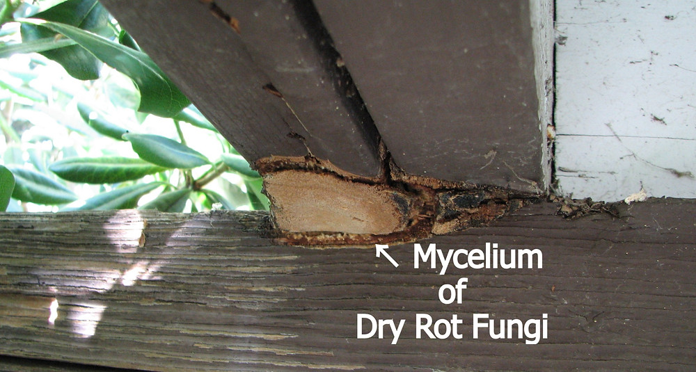 Mycelium of a dry fungus on an exterior beam