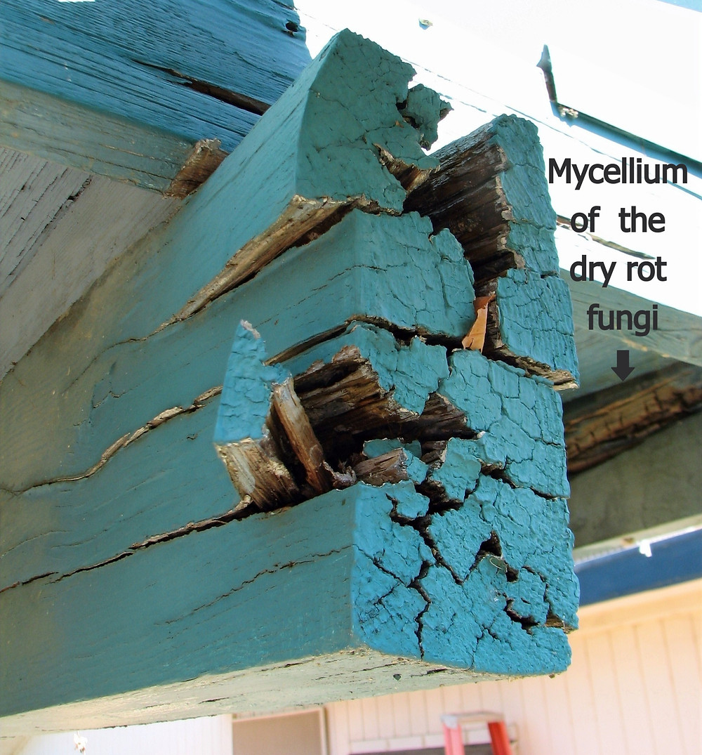 Severe dry rot caused by a brown rot in an exterior beam