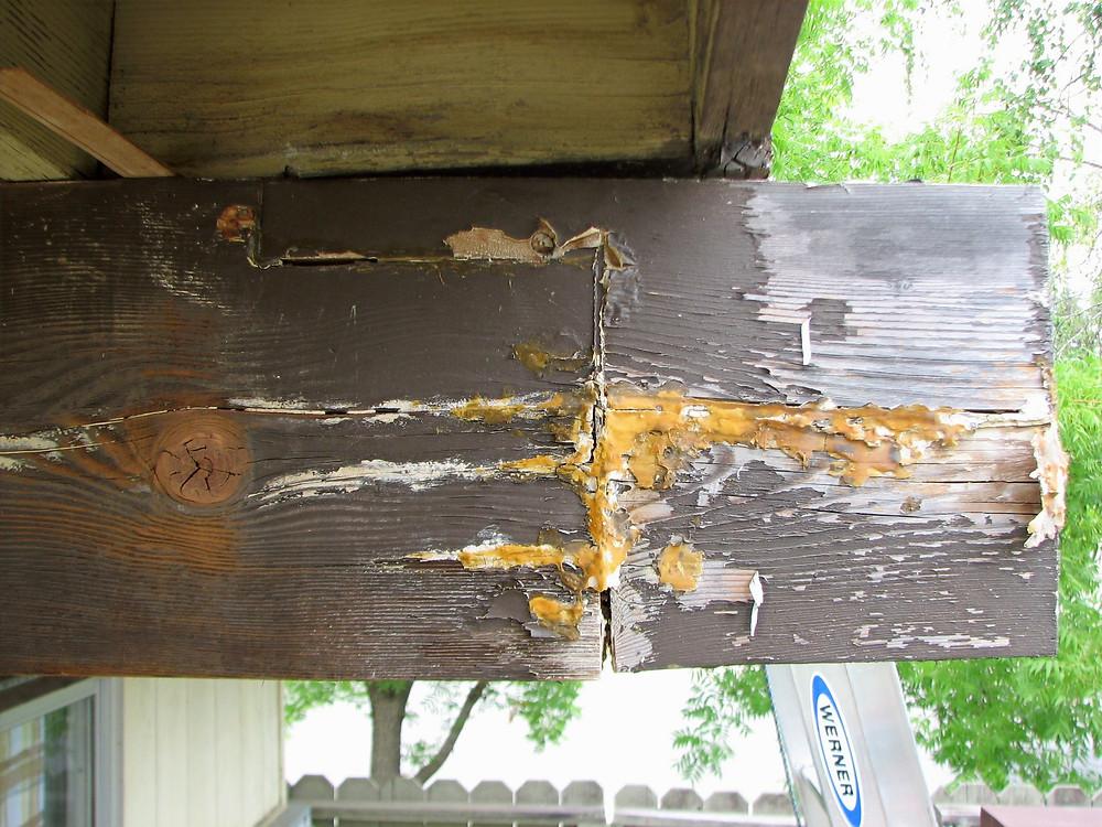 Roof beam dry rot repair failing