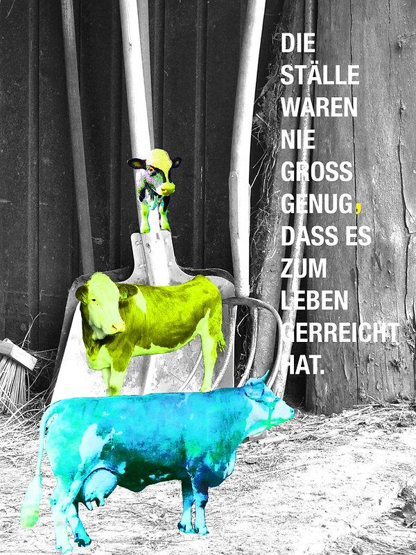 FINAL KÜHE_bearbeitet-1 2.jpg