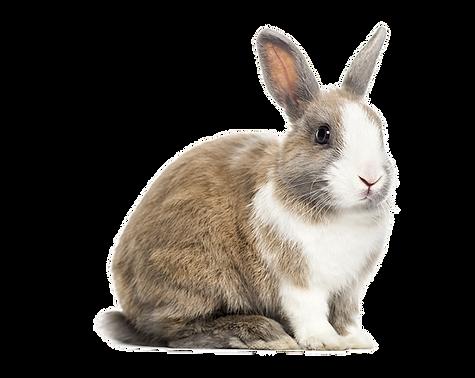MeisterLampe-Rabbit01.png