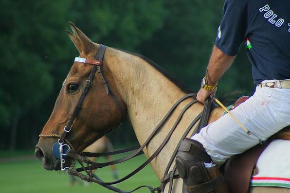 Horse free3.jpg