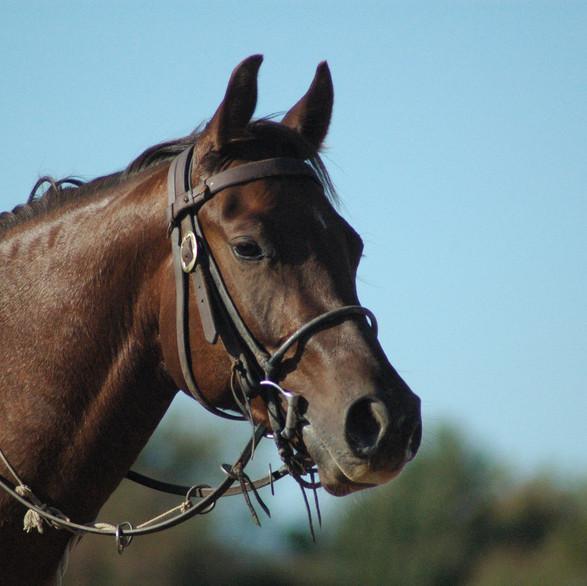Horse free2.jpg