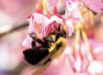 Memory des abeilles sauvages