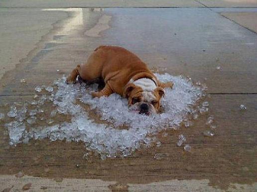 It's Too Darn Hot
